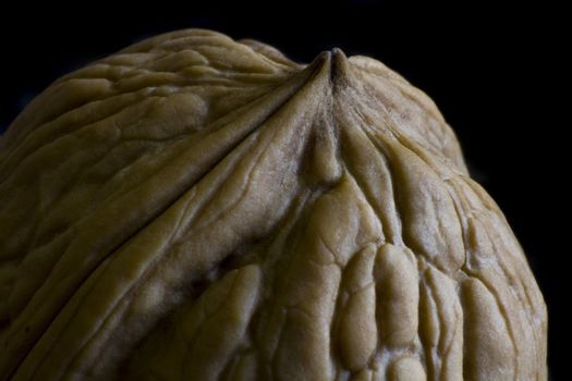 Walnut in low key picture in close up