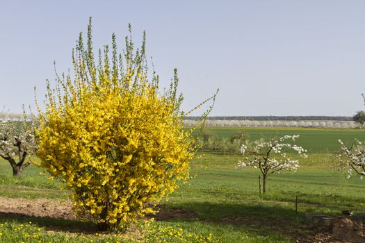 outdoor landscape with yellow scrub
