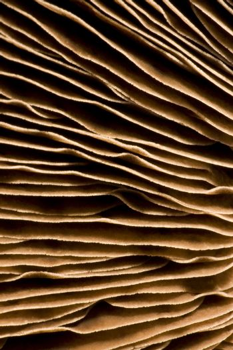 gills of a mushroom