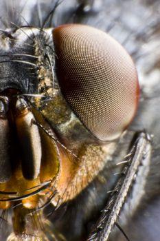 half portrait of fly