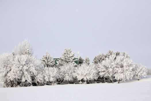Hoar frost on trees and bushes
