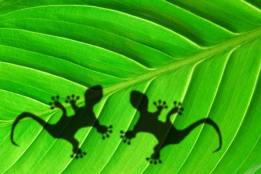tropical background with leaf and gecko or lizard animal