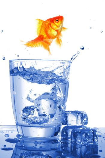 goldfish in glass of water showing challenge or creativity concept