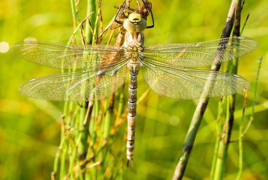 close-up dragonfly against green grass background