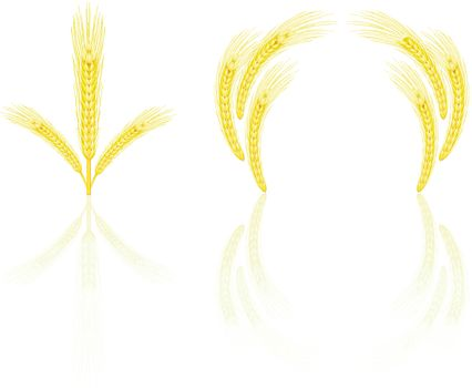 Isolated golden wheat ear after the harvest. EPS v. 8.0