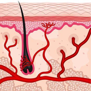 illustration of human skin cells
