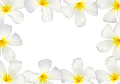 Frangipani flower frame isolated on white background