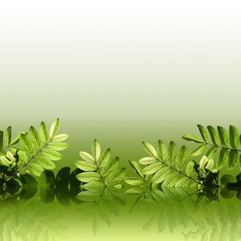 Beautiful green leafs with reflection on green background