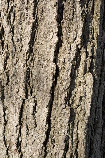 A closeup texture of some tree bark.