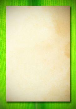 old vintage paper on green leaf background