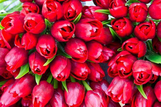tulip in basket in flower shop