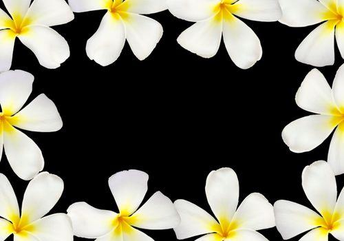 Frangipani flower frame isolated on black background
