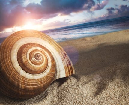 Large seashell in the sand