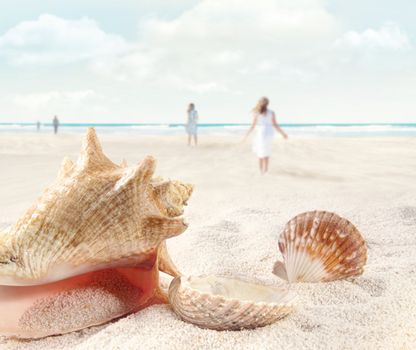 Beach scene with people walking and seashells in sand
