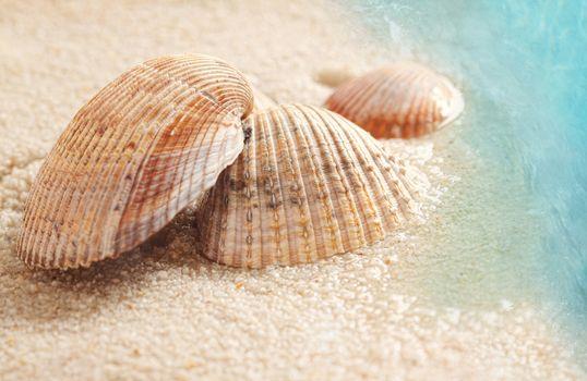 Seashells in the wet sand