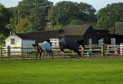Horses having fun jumping around in a field