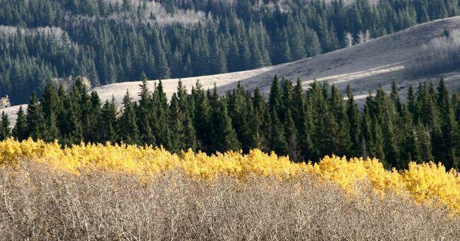 Cypress Hills during autumn