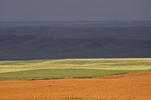 Rain dark skies and sunlit fields in Saskatchewan