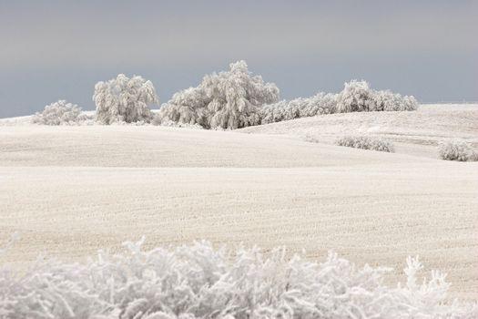 Frosty winter day in Saskatchewan