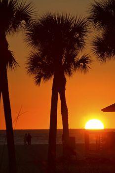 Sun setting behind Palm trees on Gulf Coast of Florida