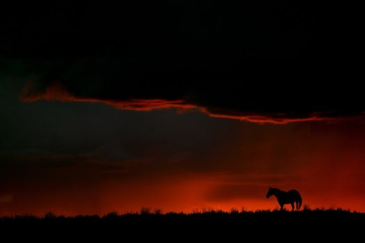 Set sun silhouetting horse on Saskatchewan ridge