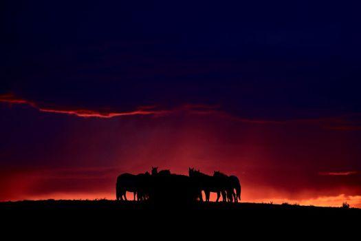Set sun silhouetting horses on Saskatchewan ridge