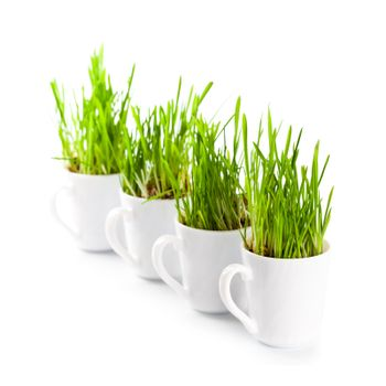 green grass in coffee cups c