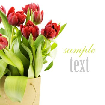 fresh tulips on white background with sample text