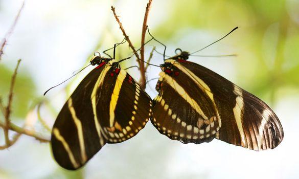 Roosting Butterflies Bookends