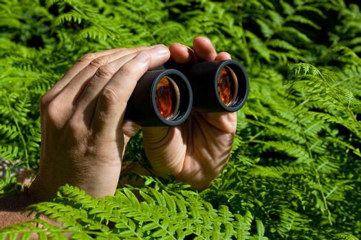 Binoculars in hand from the bushes