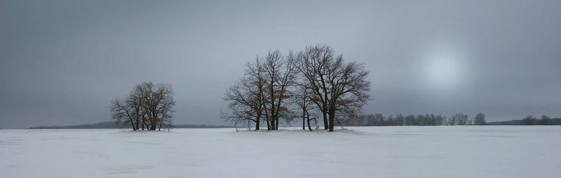Winter landscape with a lone tree