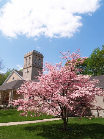 a cherry blossom tree in front of a church