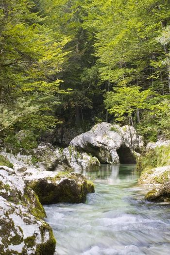 Mountain river in green forest - Mostnica - Slovenia