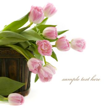 Tulips in the basket on white background. With sample text
