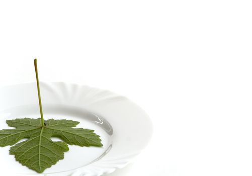 Closeup of white plate with leaf. Copy space. White background.