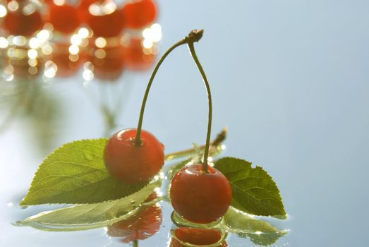 two cherry twig