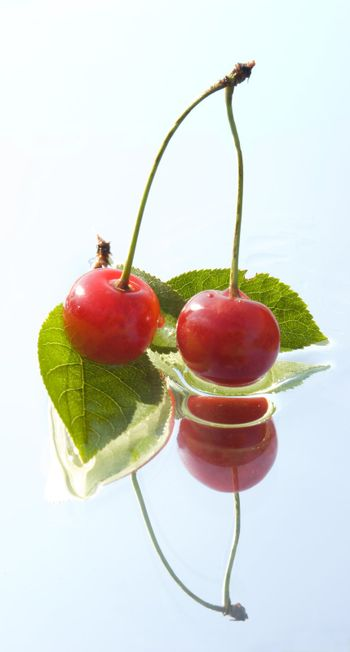 cherry twig with reflection