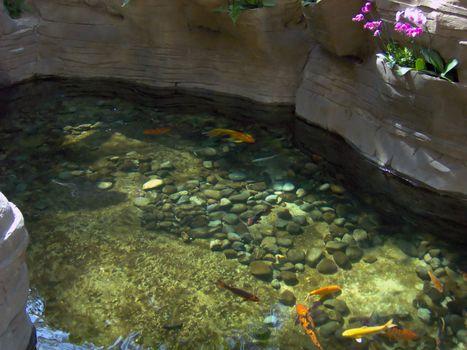 A nice goldfish pond.
