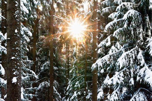 Sunbeam through the Winter Forest