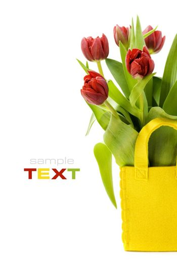 fresh tulips on white background with copyspace