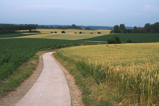Evening fields with narrow deserted road