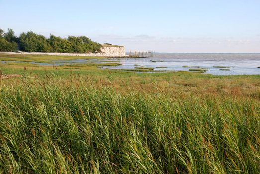 Marsh in Talmont