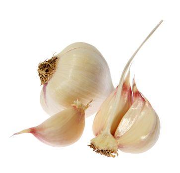 Germinating garlic on the white background