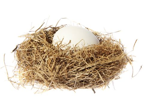 Birds nest with eggs on the white background. (isolated)