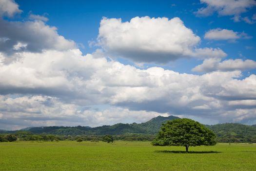 Tree in field with beautiful sky. Costa Rica.