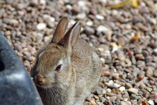 small baby rabbit