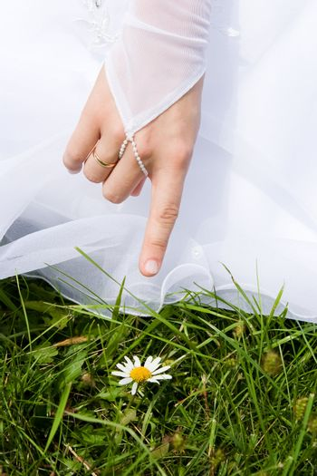 The bride shows on a white camomile