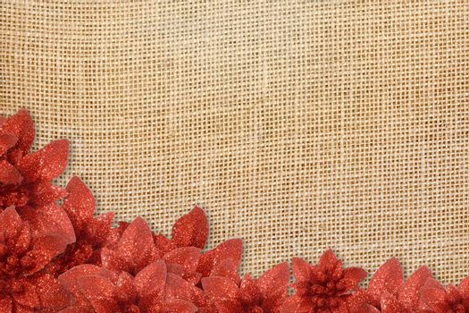 Christmas background, poinsettias under burlap on canvas