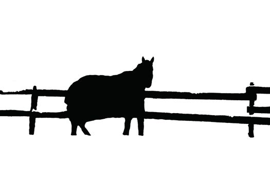 Highlighted silhouette of thouroughbread horse on white background with fence