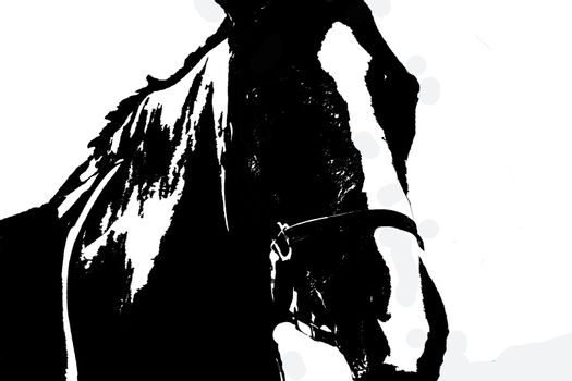 Highlighted silhouette of thouroughbread horse on white background